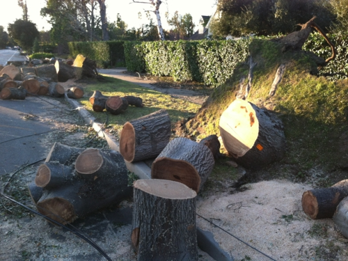 Pasadena trees reduced to firewood after wind storm in Pasadena