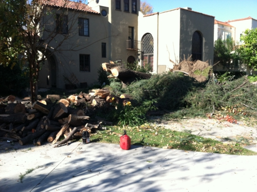 Tree that fell on San Marino house in Pasadena Wind Storm
